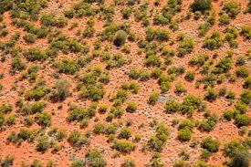 Australian Bushes 1