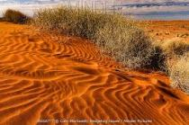 Spinifex3