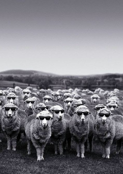 11_pecore